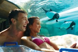 Aquatica®, SeaWorld's Waterpark